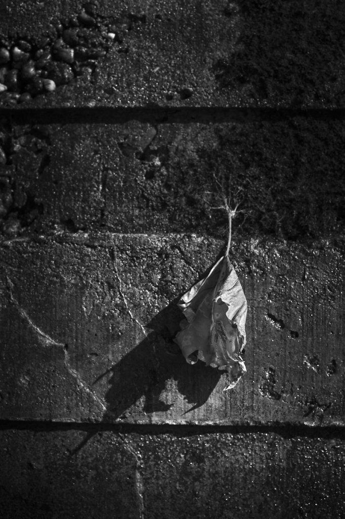 Rêveries d'automne 03