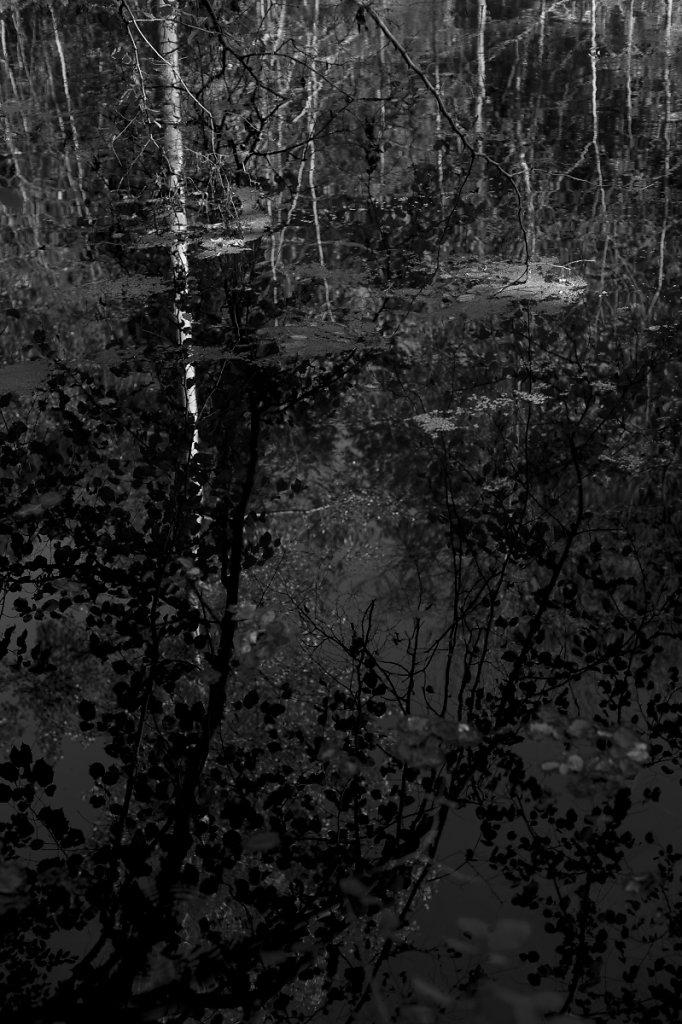 Rêveries d'automne 07