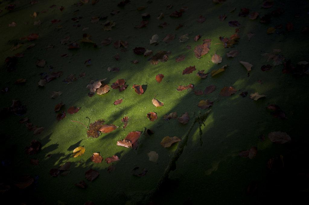 Rêveries d'automne