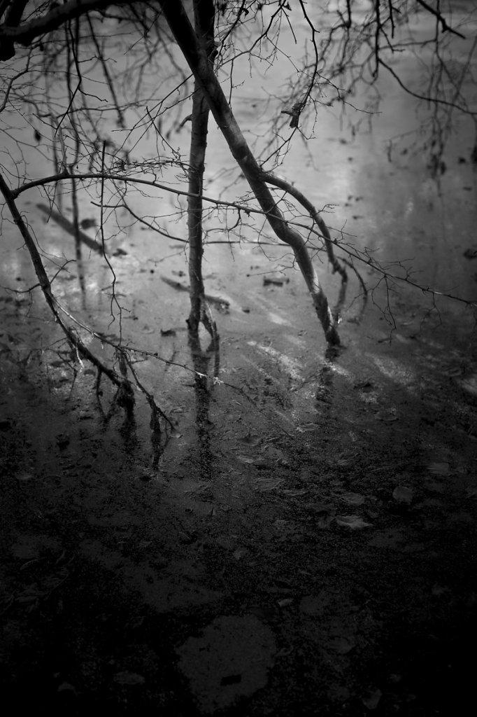 Rêveries d'automne 12