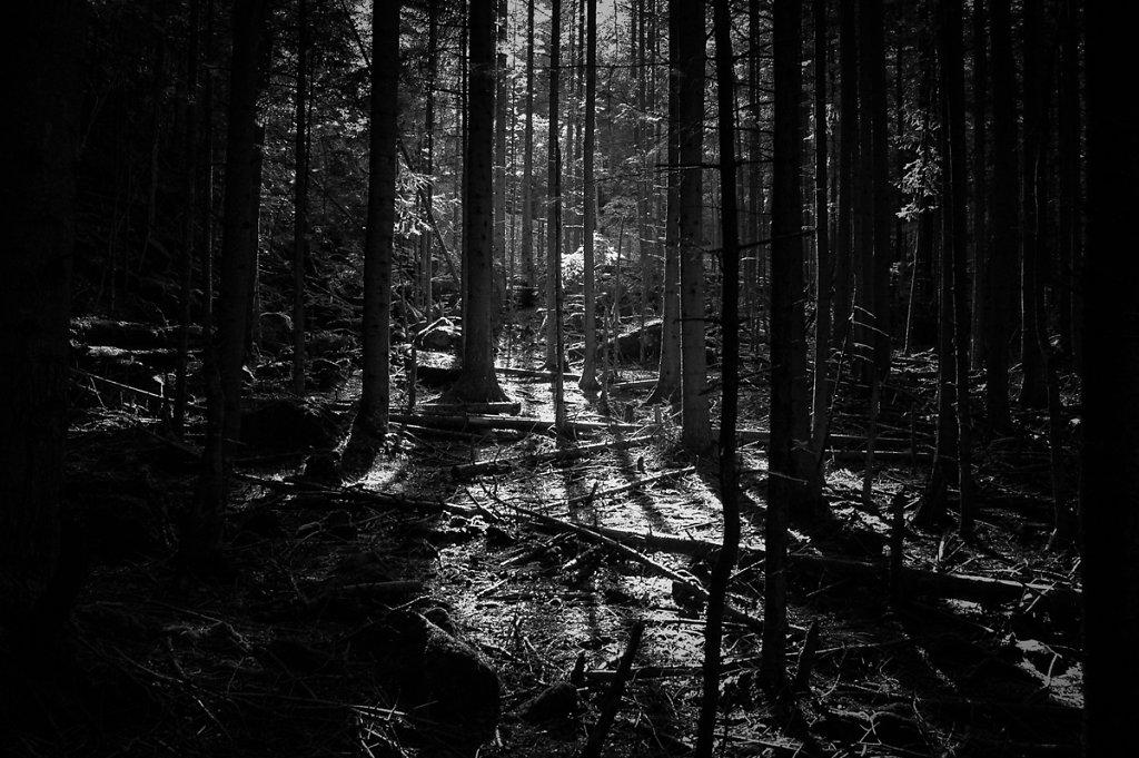 Dans les bois / 02
