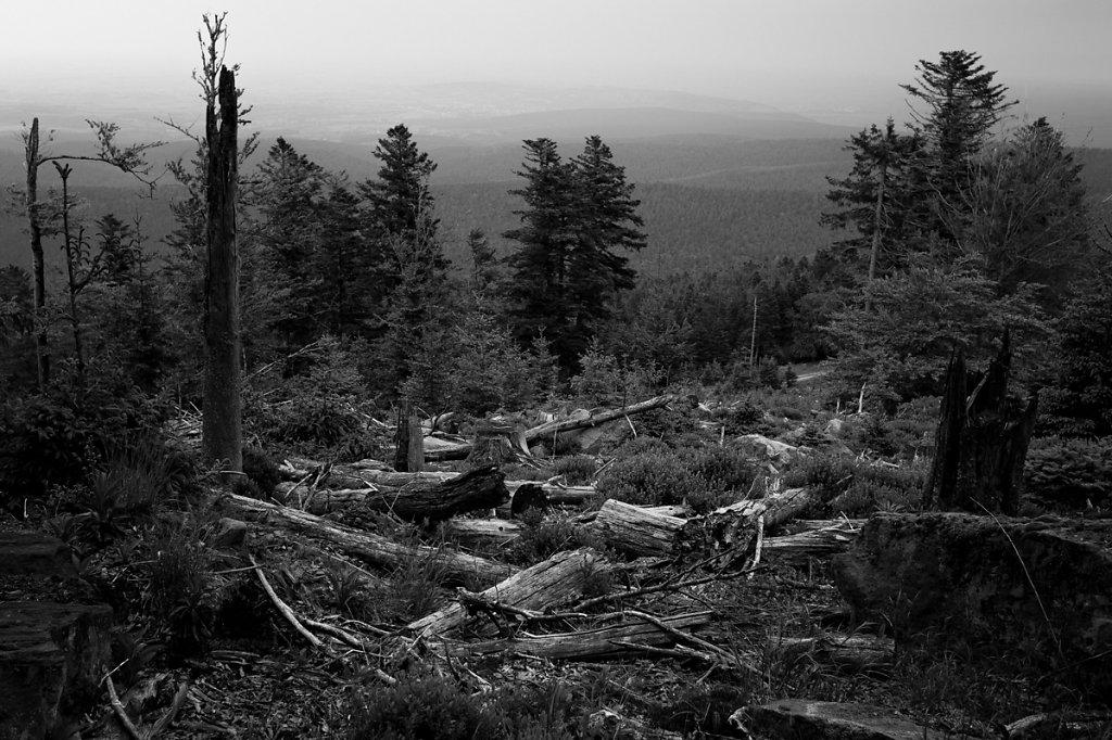 Dans les bois / La trouée