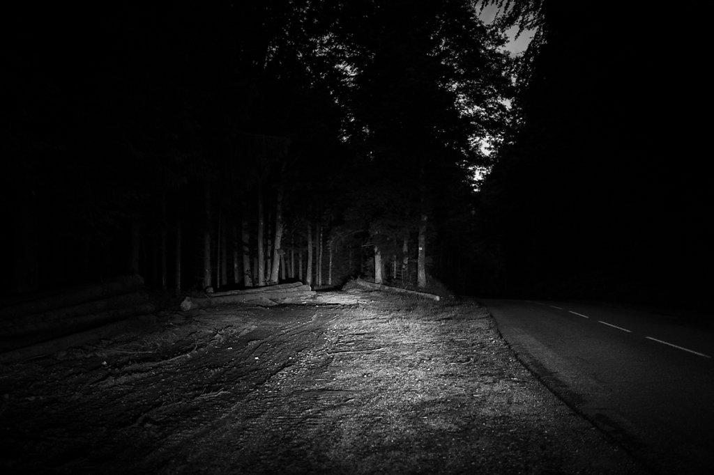 C'est beau une forêt la nuit