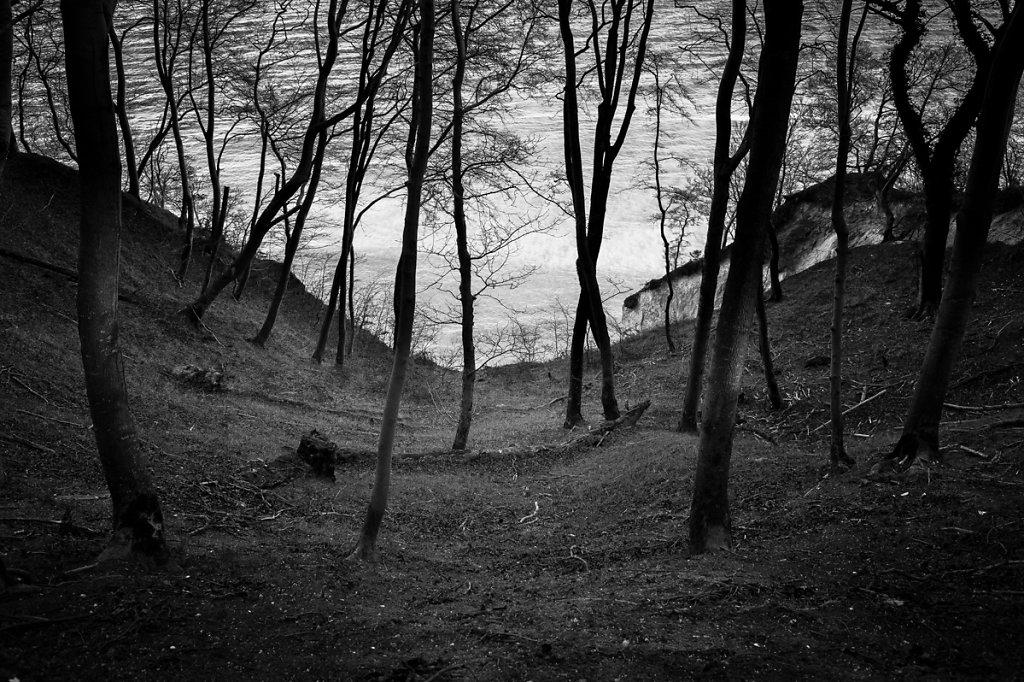 Dans les bois / Hommage à Friedrich / I