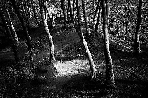 Dans les bois / Hommage à Friedrich / II