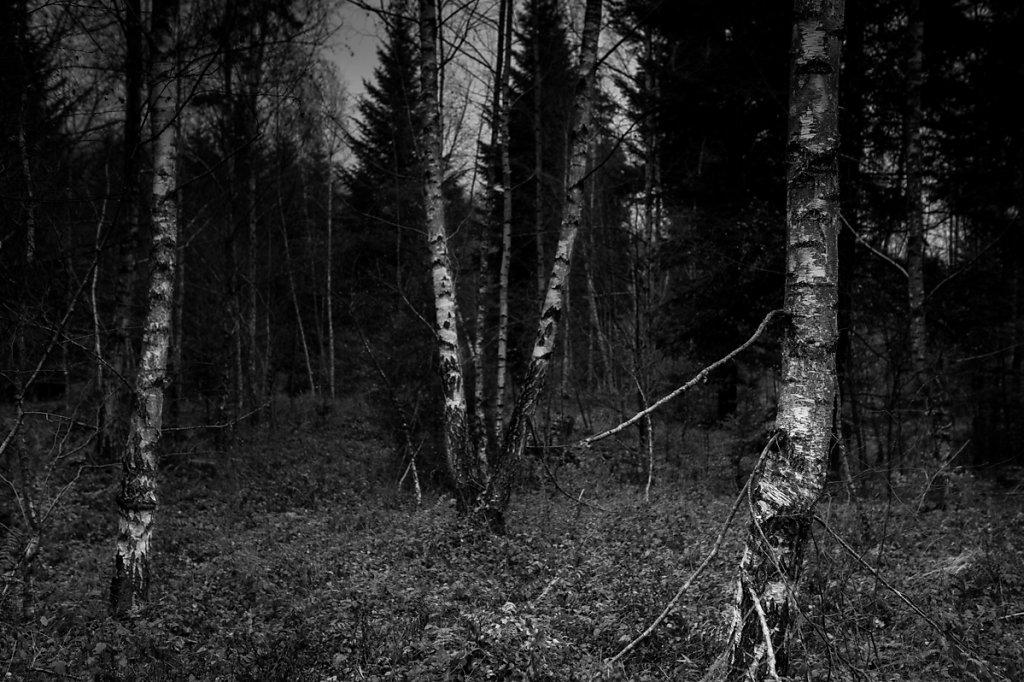 Dans les bois / Birkenwald