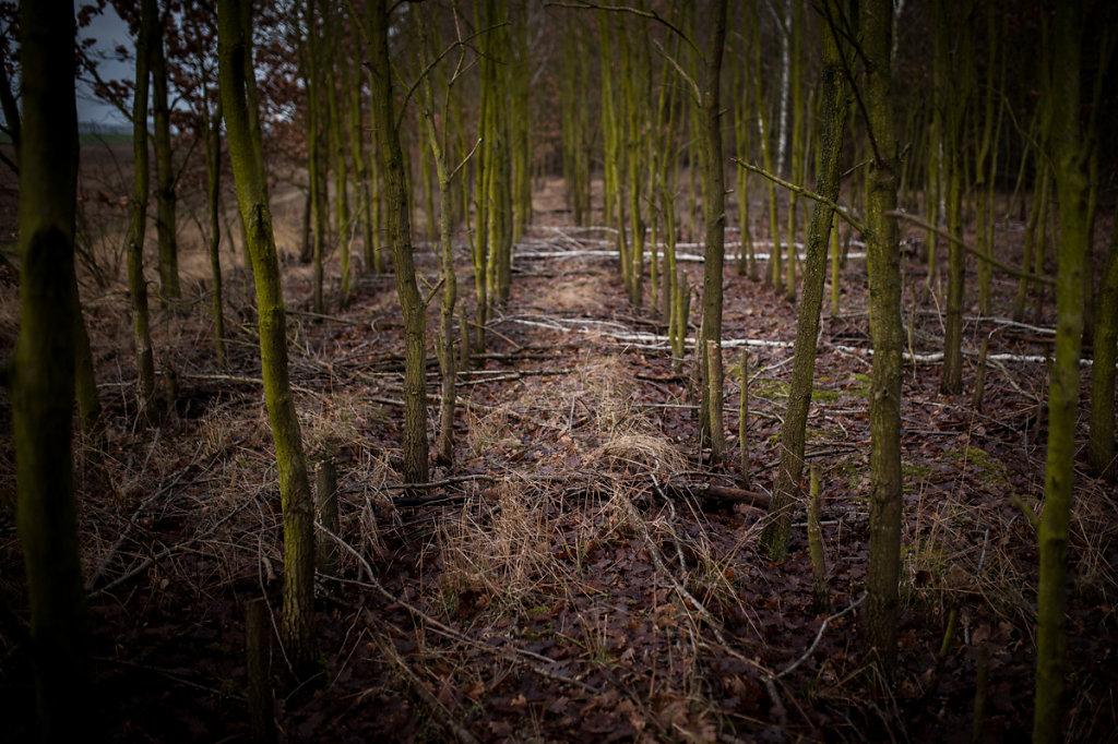 Dans les bois - Point de fuite I