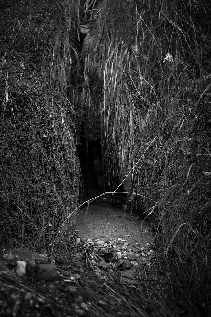 Dans les bois - L'origine de la terre
