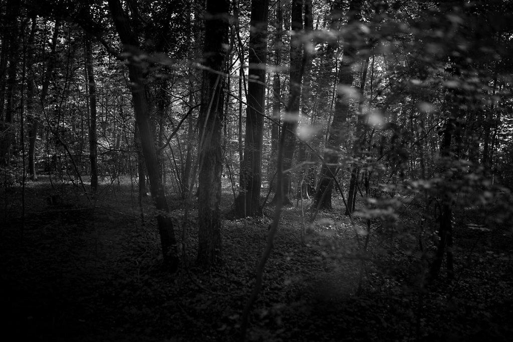 Dans les bois - Voilé