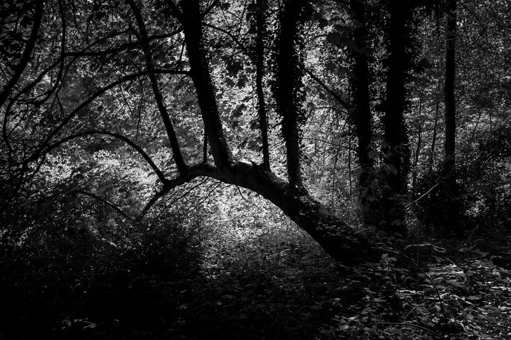 Dans les bois - La barrière