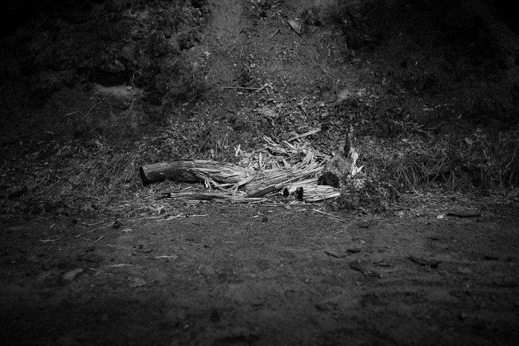 Dans les bois - La mort dans l'âme