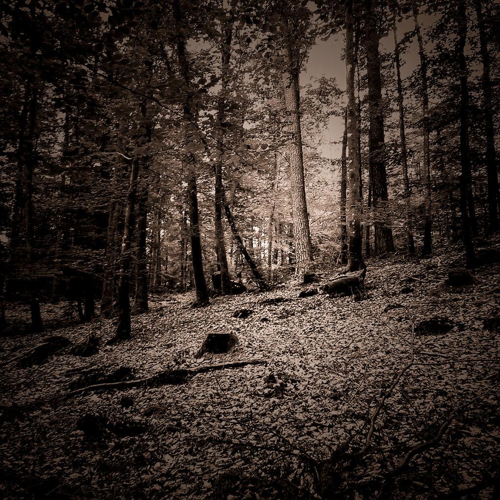 """""""Roter Berg"""", Bruno Fleutelot.2015 - Couverture définitive"""