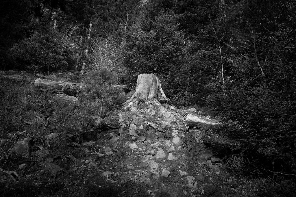 Dans les bois - 4 / Ce n'est pas triste les vieilles écorces... ( * Le petit prince /  Antoine de Saint-Exupéry )
